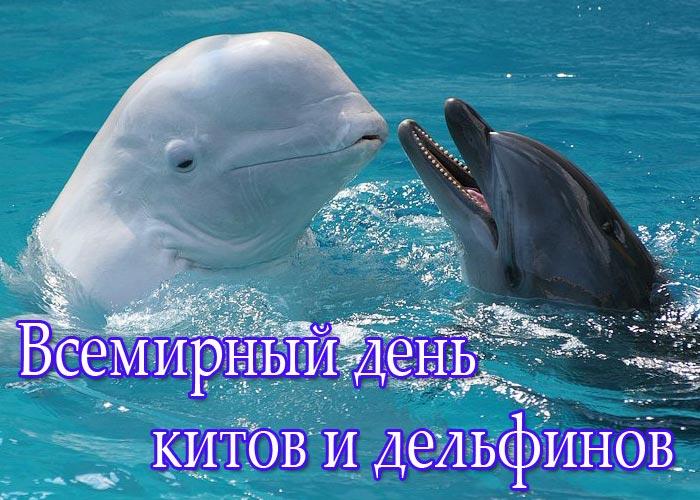 Волшебный мир китов и дельфинов